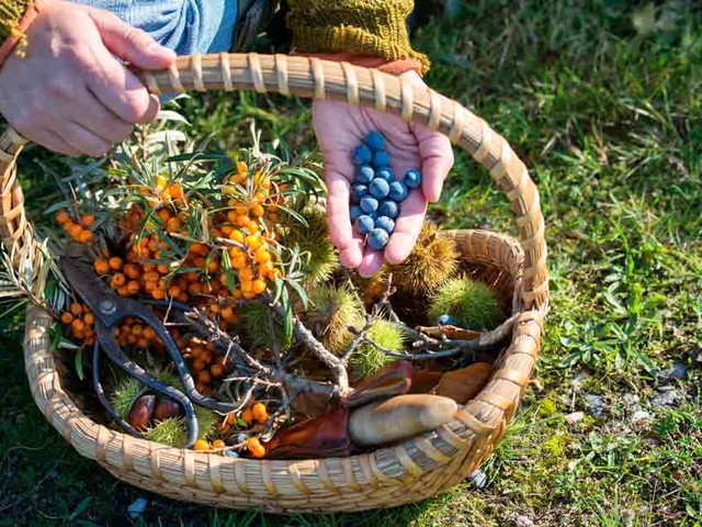 How to grow and forage without owning land