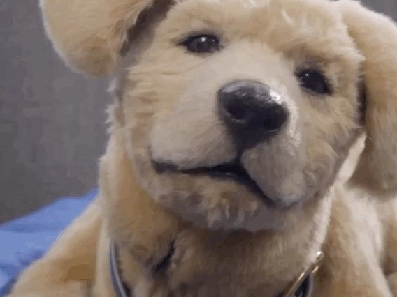 Is this robotic therapy pet the uncanny valley of dog?