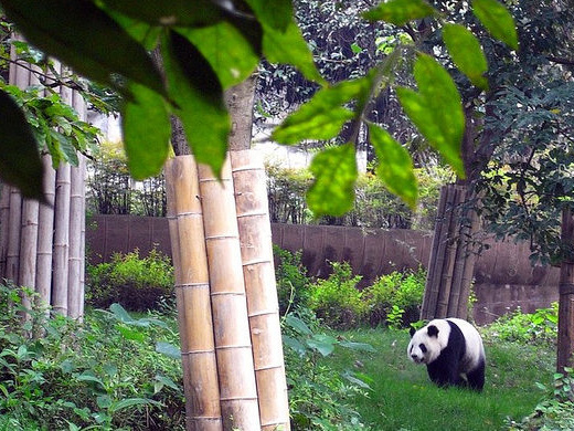 United: Chicago – Chengdu, China. $369. Roundtrip, including all Taxes