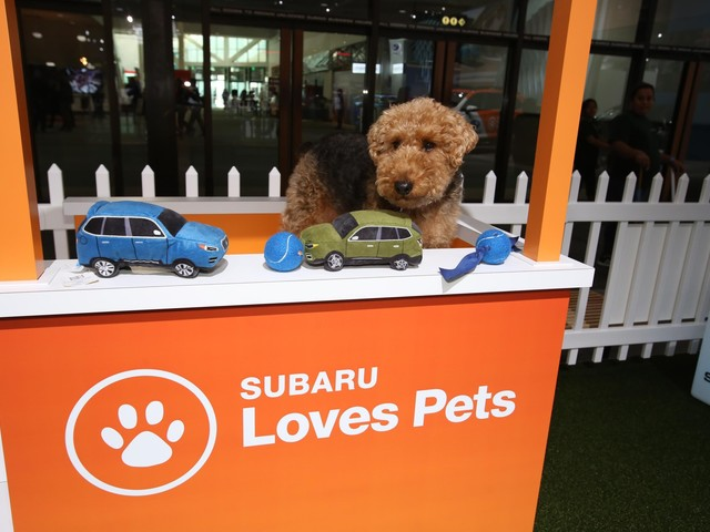 This Just In: Subaru Going For The Dogs…Big Time!