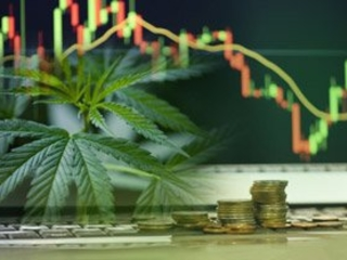The 3 Top Marijuana Dividend Stocks to Buy in January