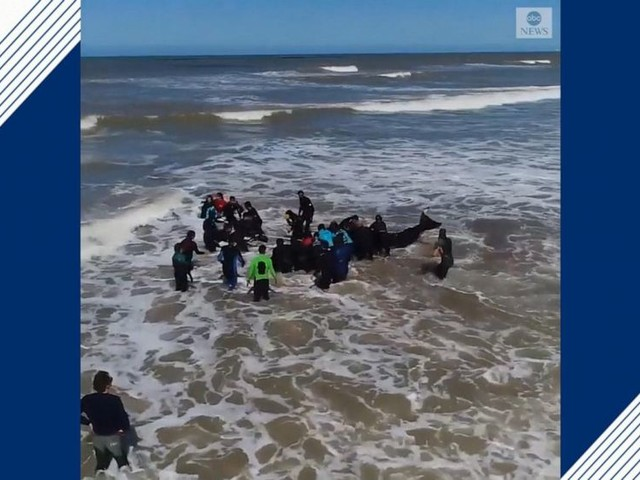 WATCH: 6 orcas saved from beach in Argentina