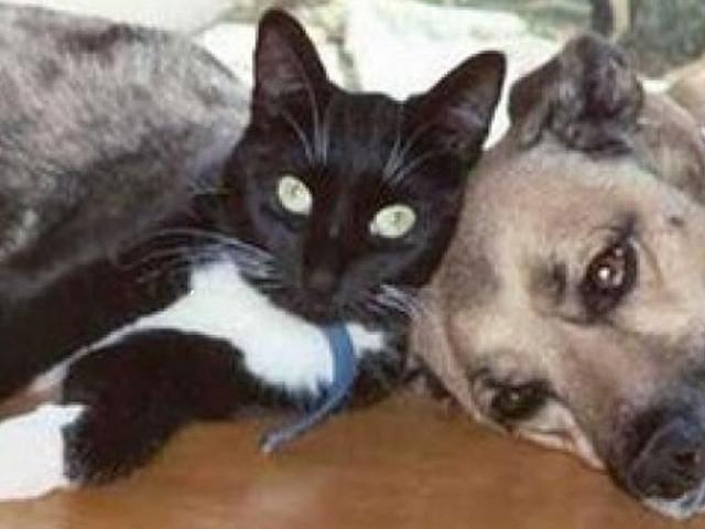 Coronavirus & Pets: Broward County Animal Care Finds Success with Virtual Adoptions