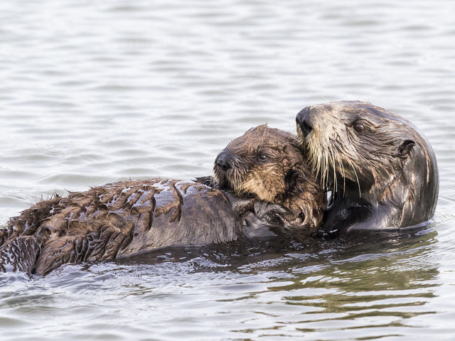 Even the tiniest amount of oil can hurt them — but there's still time to stop this.