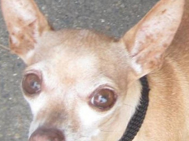 SSPCA Pet of the Week: Kevin Bacon