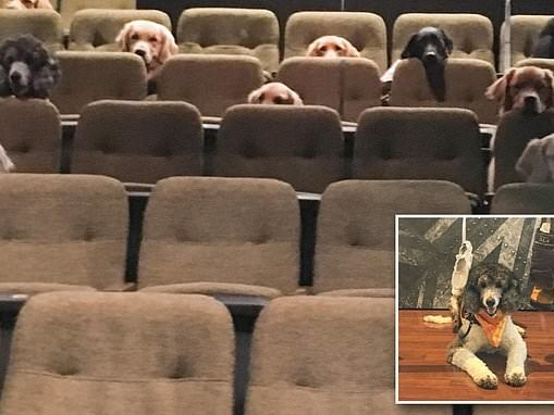 Picture of a dozen service dogs watching Canadian theater production of Billy Elliot goes viral