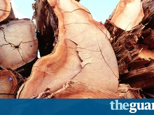 Global firms accused of importing timber linked to Amazon massacre