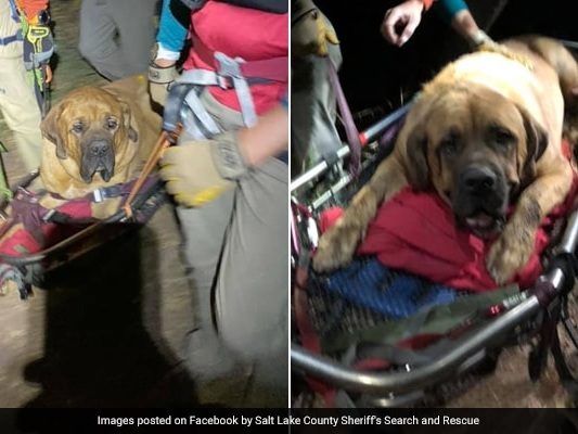 Rescuers Win Hearts By Carrying Exhausted Dog Down Mountain Trail