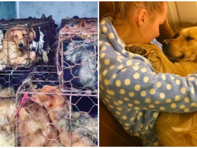 Dog Trapped In Horrible Cage Had No Idea His Life Was About To Change