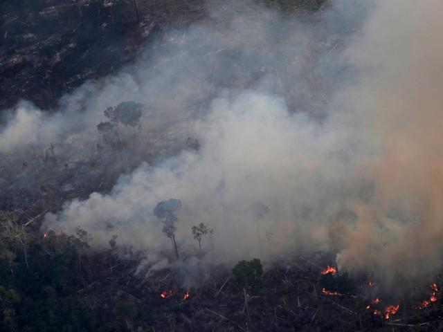 The Ravaging of Amazonia