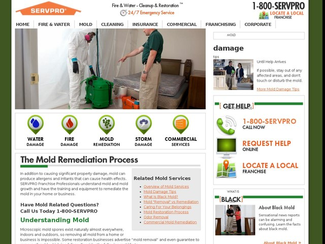 Mold Cleanup and Mold Restoration | Servpro Industries, Inc.