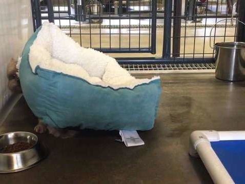 Little Dogs Were So Scared At Shelter They Wouldn't Stop Hiding Under Bed