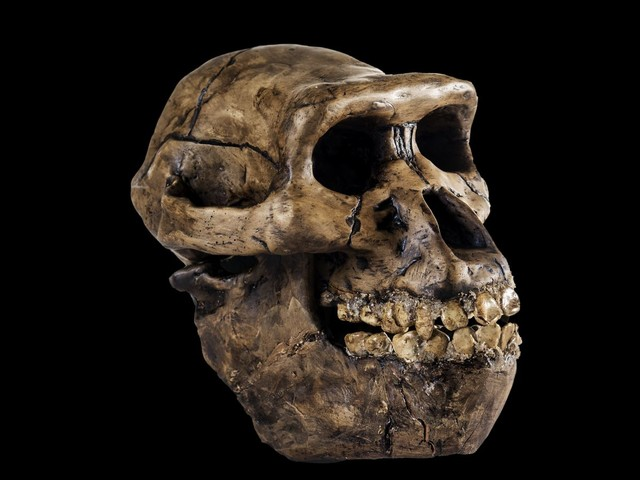 How many early human species existed on Earth?