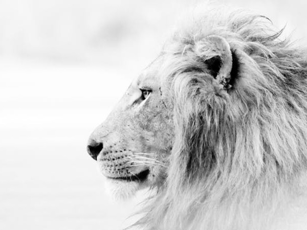 The Legacy of Good Leadership Is Sacrifice: Why Jesus Was the Lion of Judah