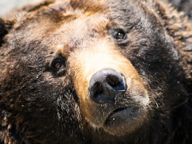 The Newest Threat To This Year's Olympics? A Rogue Bear