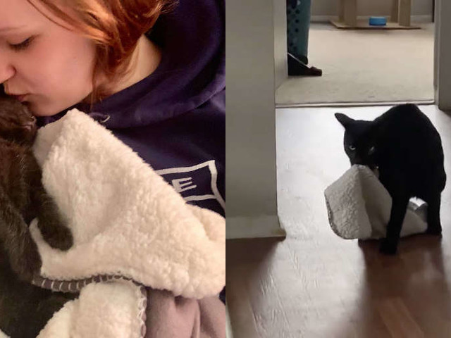 Cat Insists On Carrying His 'Baby' Blanket Everywhere With Him