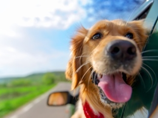 Pets on the Loose in Your Car Could Cause a Serious Accident