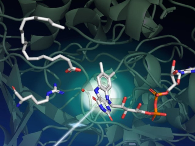 Scientists uncover structure of light-driven enzyme with potential biofuel applications