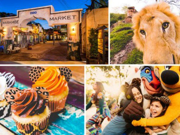 Details, Menu Released for 'Circle of Flavors: Harambe at Night' Event at Animal Kingdom