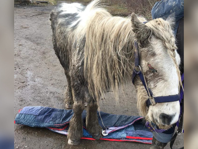 Sick, Blind Pony Left Alone On Road Was Just Waiting For Someone To Help Him