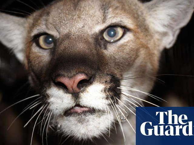California woman punched mountain lion in effort to save her dog