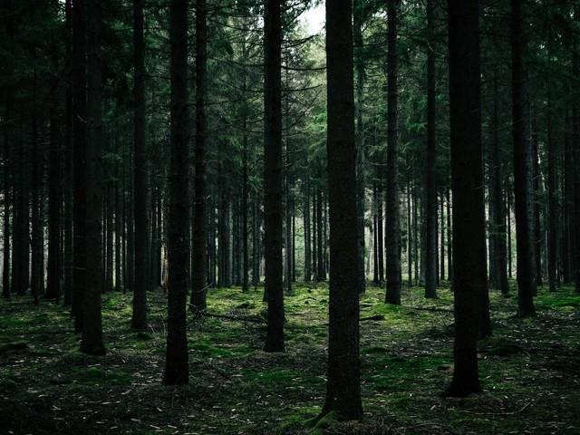 Seeking God Through Doubt: Counsel for a Faith Crisis