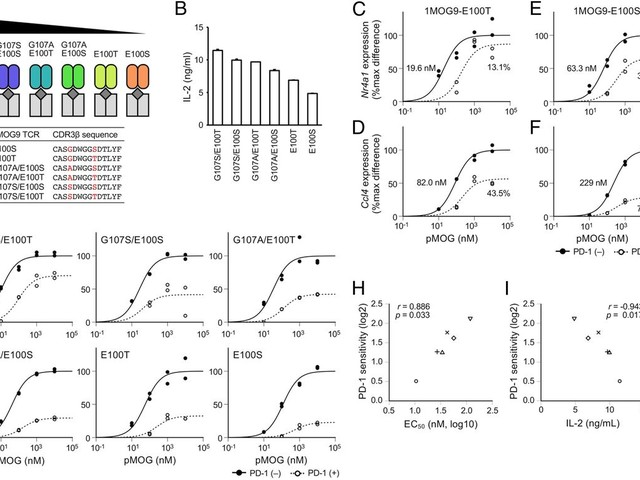 PD-1 preferentially inhibits the activation of low-affinity T cells [Immunology and Inflammation]
