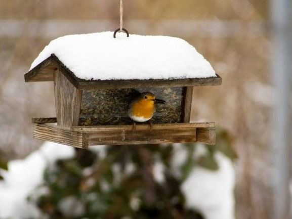 5 Things to Know About Feeding Birds in Winter