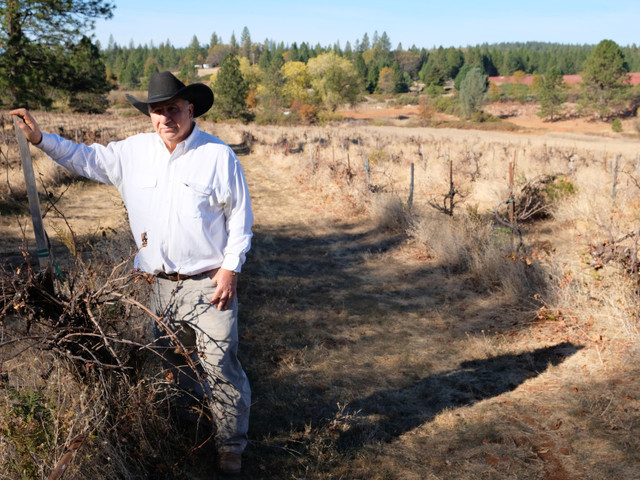 'A knife through my heart': Northern California family's organic vineyard struggling after Camp Fire
