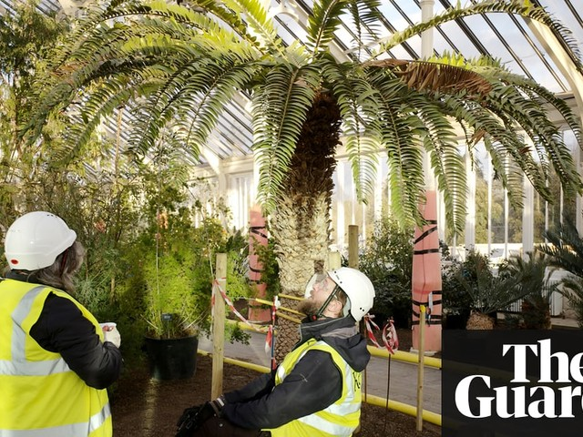 Kew Gardens' Temperate House restoration - in pictures