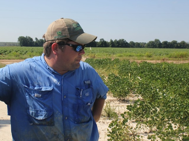 The outlook for American soybeans remains 'bleak' in wake of Trump's trade war
