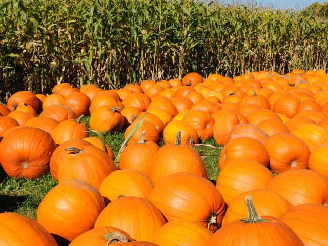 Get Lost in These 20 Corn Mazes and Pumpkin Patches Across America