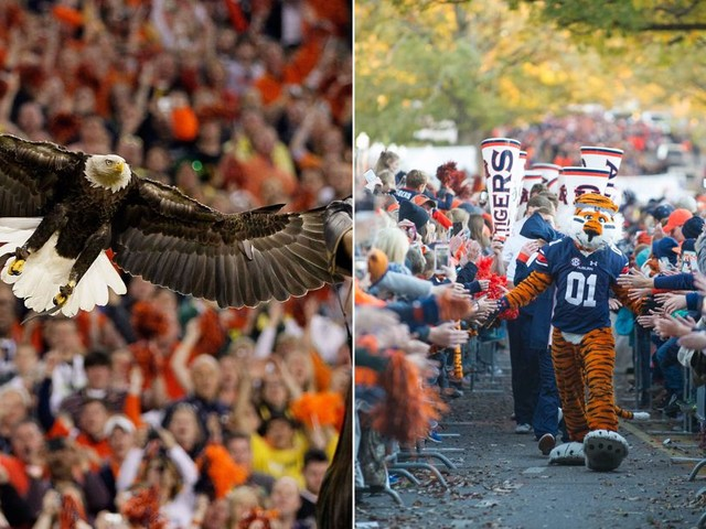 'War Eagle' is Auburn's battle cry, but the school doesn't technically have 2 mascots