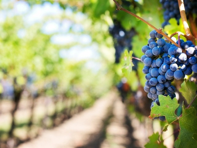 Tourism slowly recovers in Napa Valley and Santa Barbara this pandemic summer