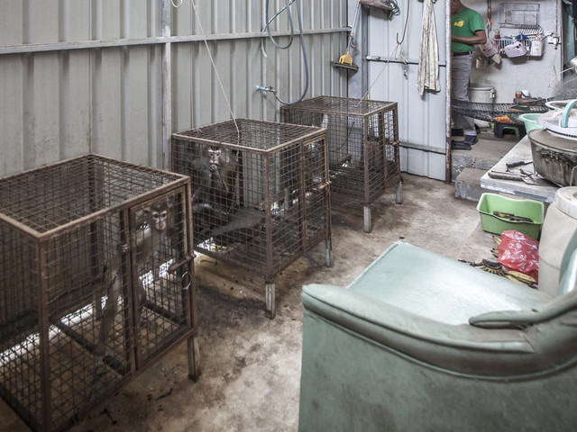 Sad Photo Shows Where Performing Monkeys Are Kept Between Acts