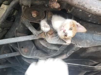 It Took A Team of Mechanics To Get This Kitten Out Under A Car