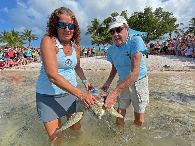 Juvenile Green Sea Turtle Released In Florida Keys To Join Tour de Turtles Online Race