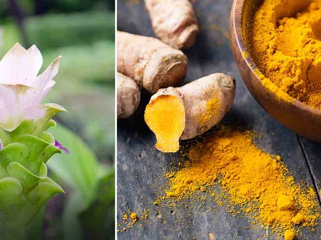 Growing Turmeric Is Easier Than You Think
