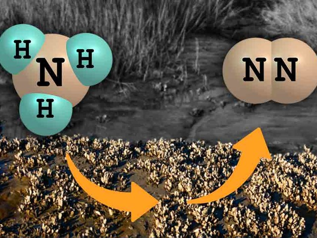 How Oysters May Help Reduce Nitrogen Pollution