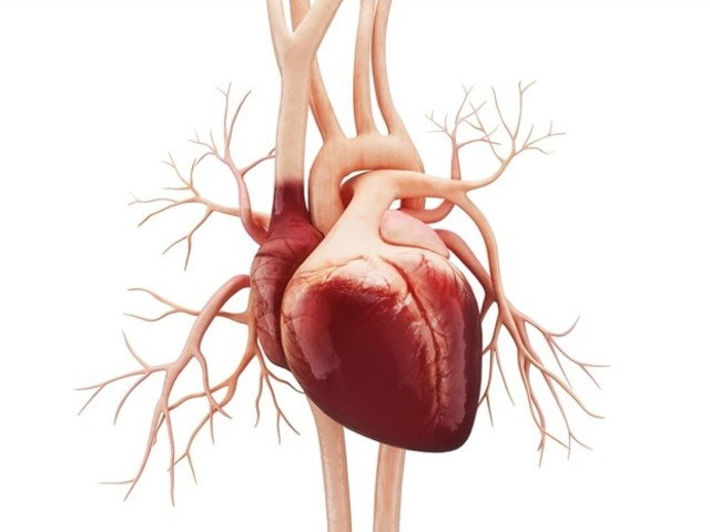 Educational program for preschoolers successful in instilling heart healthy behaviors