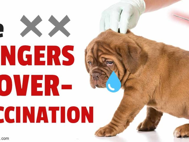 It's Time to Put a Stop to the Mindless Over-Vaccination of Pets