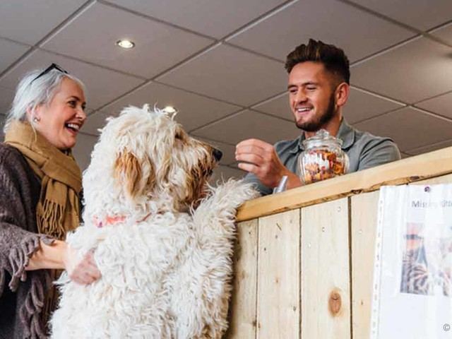 Pet-Friendly Hotels on the Rise: What to Know Before You Book