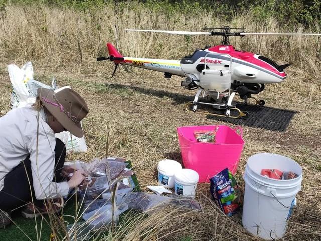 Drones to drop seeds to boost koala gum tree numbers after devastating bushfires