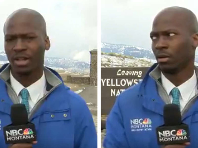 Reporter Has Perfect Reaction To Herd Of Bison Crashing His News Segment