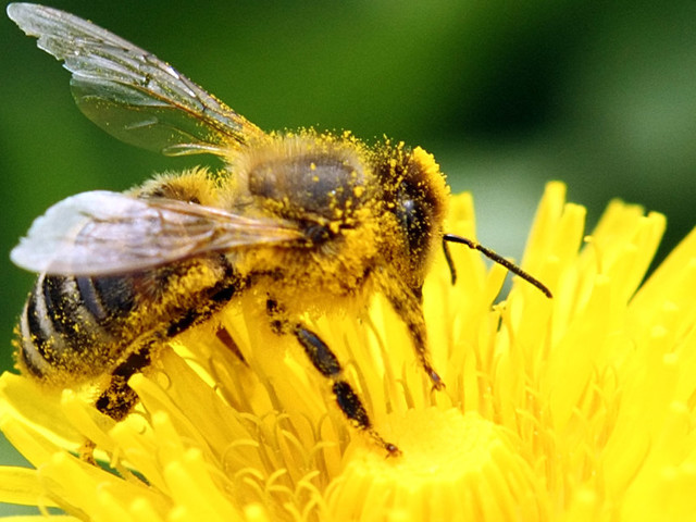 It's Time To Ban Bee-Killing Pesticides