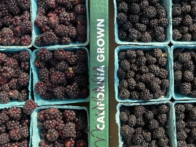 Berries at the farmers market: An embarrassment of riches