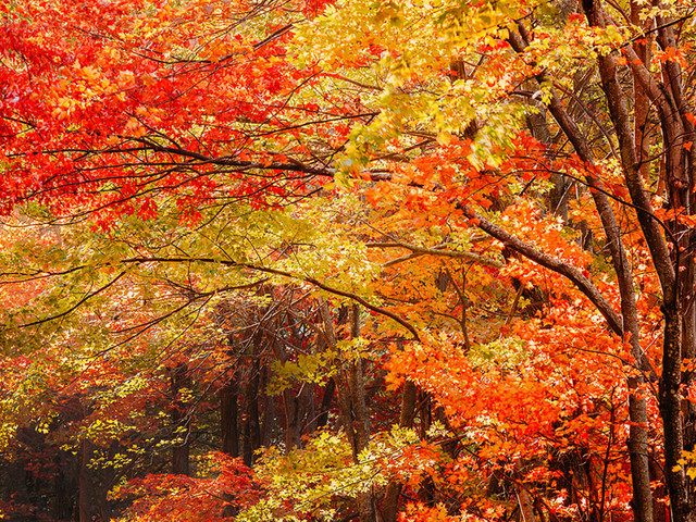 Warmer weather could delay peak fall foliage for autumn 2019