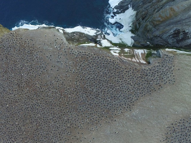 How This Supercolony of 1.5 Million Penguins Stayed Hidden for Nearly 3,000 Years