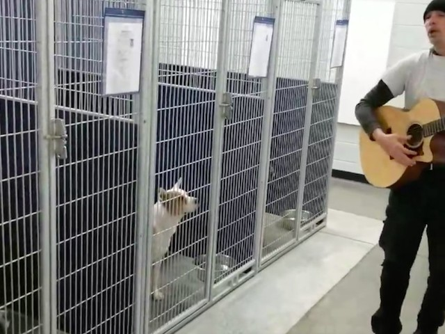 Officer Serenades Homeless Dogs At Shelter — And They Have The Sweetest Reaction