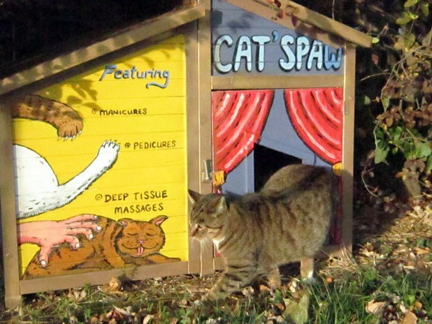 'Meowy Cats-mas' party at Millard Fillmore bar to raise money for cat charity